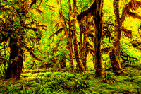 Hoh Rainforest _8697-T